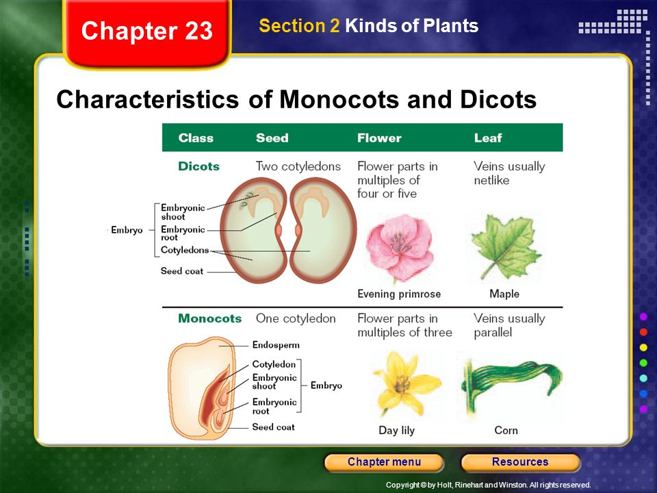 Characteristics of Monocots and Dicots