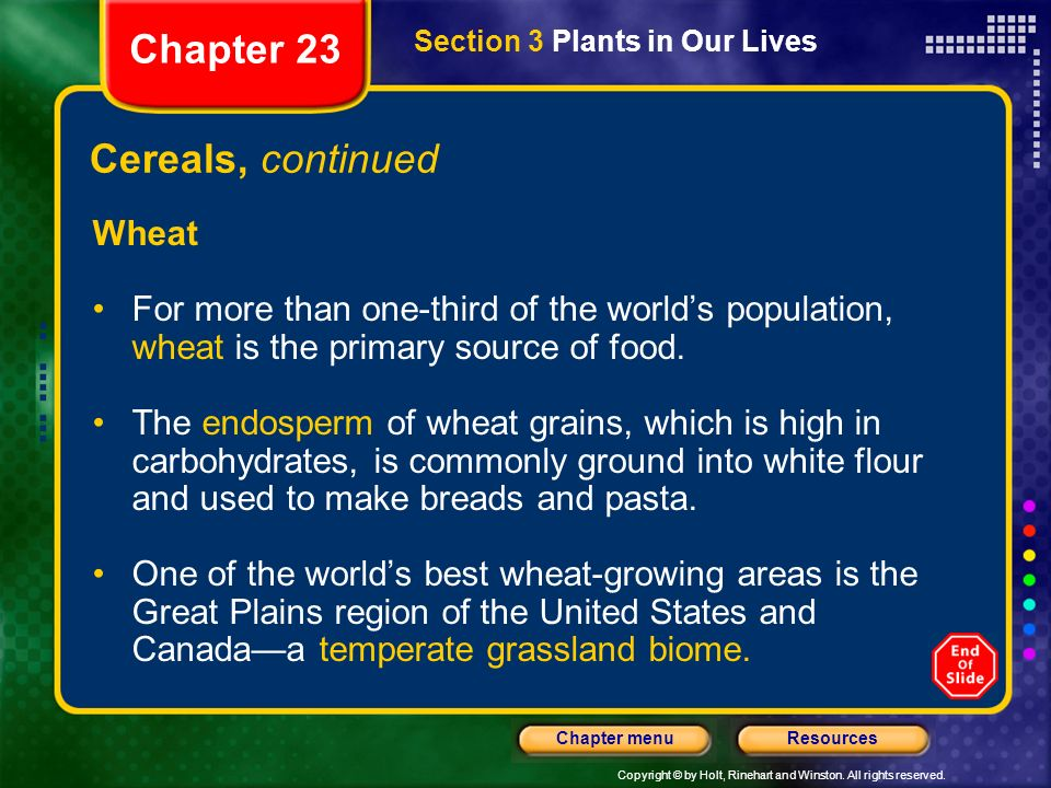 Chapter 23 Cereals, continued Wheat