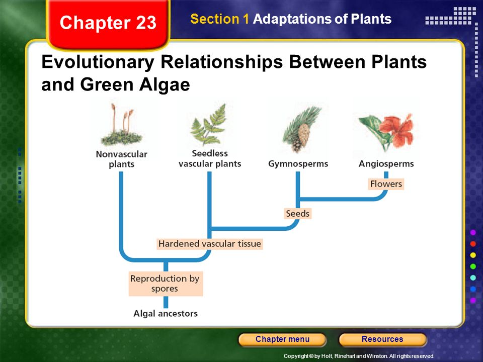Evolutionary Relationships Between Plants and Green Algae