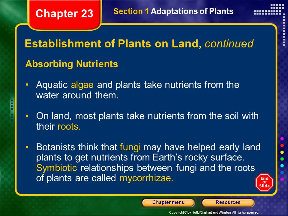 Establishment of Plants on Land, continued