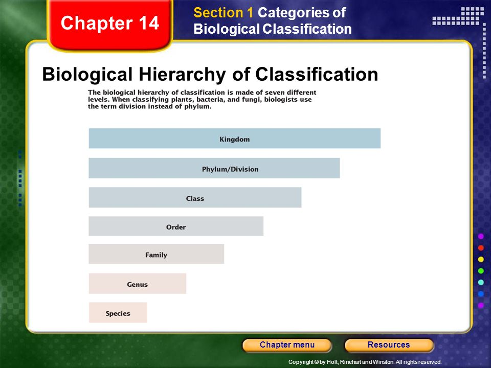 Biological Hierarchy of Classification