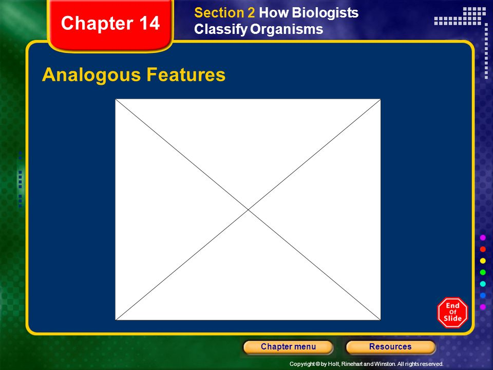 Chapter 14 Analogous Features