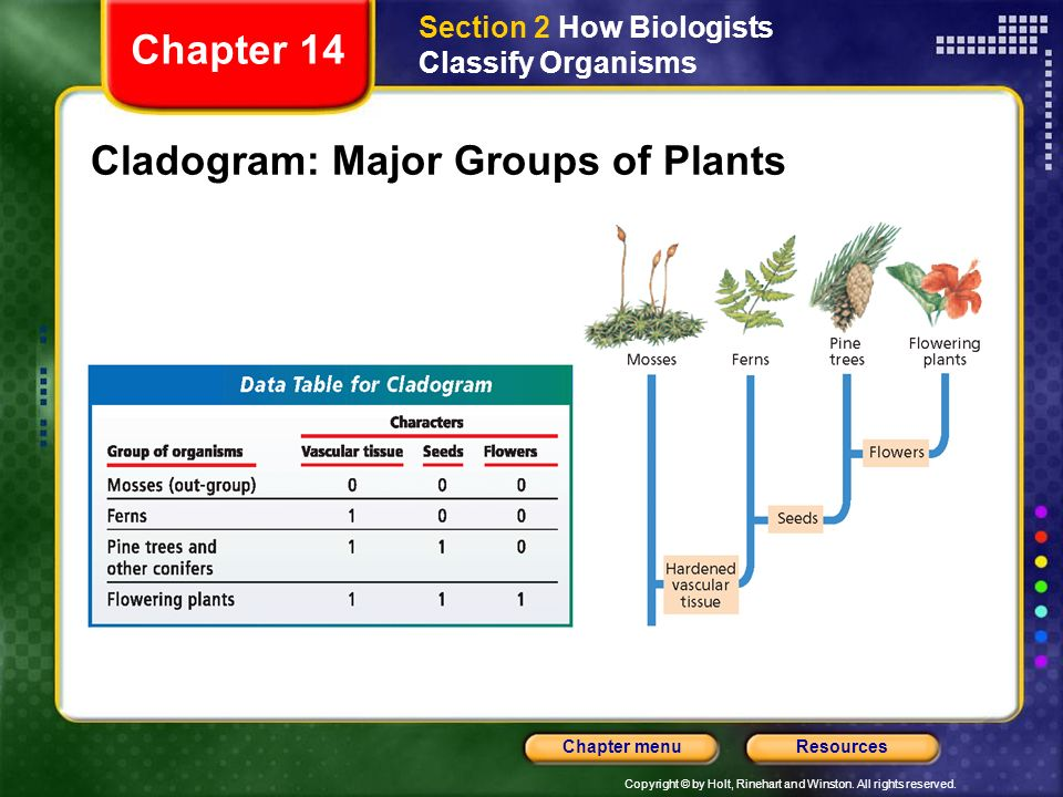 Cladogram: Major Groups of Plants
