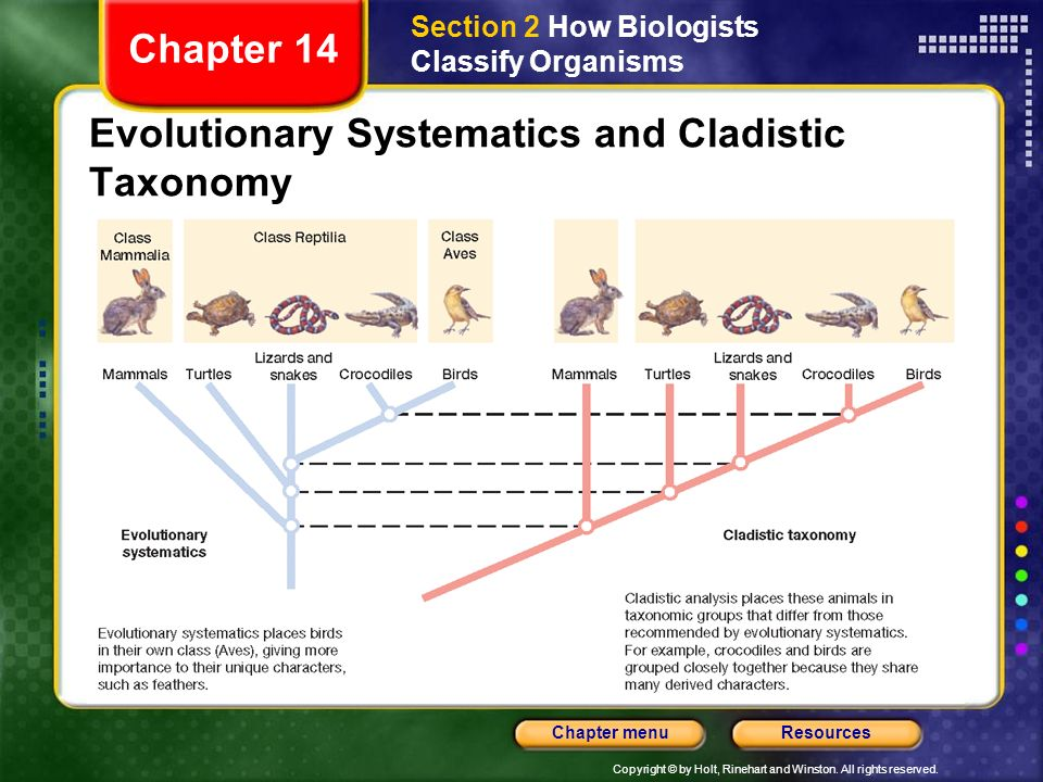Evolutionary Systematics and Cladistic Taxonomy