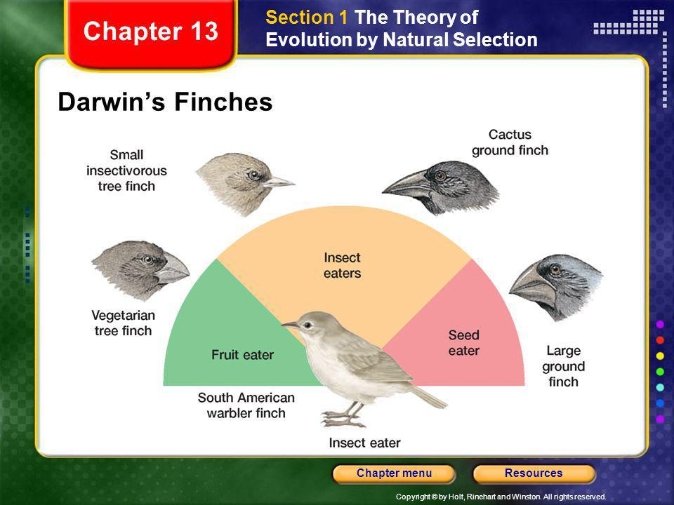 Chapter 13 Darwin's Finches