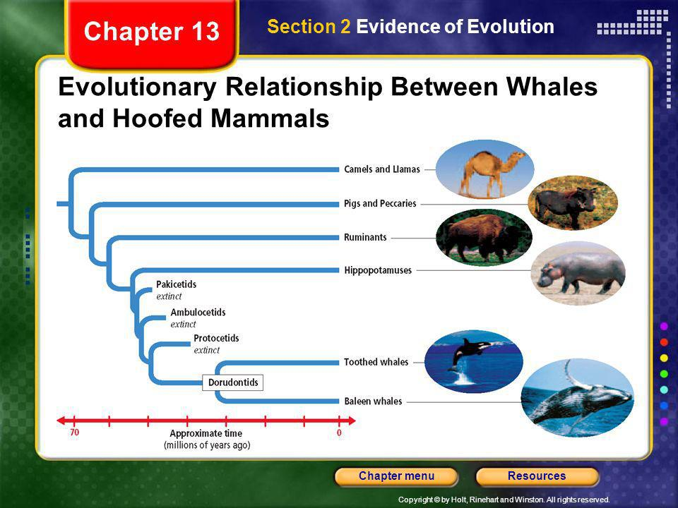 Evolutionary Relationship Between Whales and Hoofed Mammals