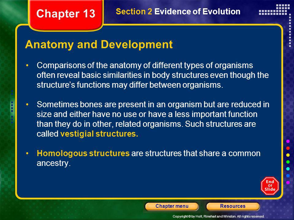 Anatomy and Development