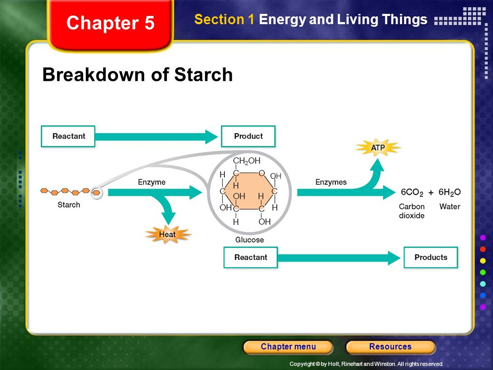 Chapter 5 Section 1 Energy and Living Things Breakdown of Starch
