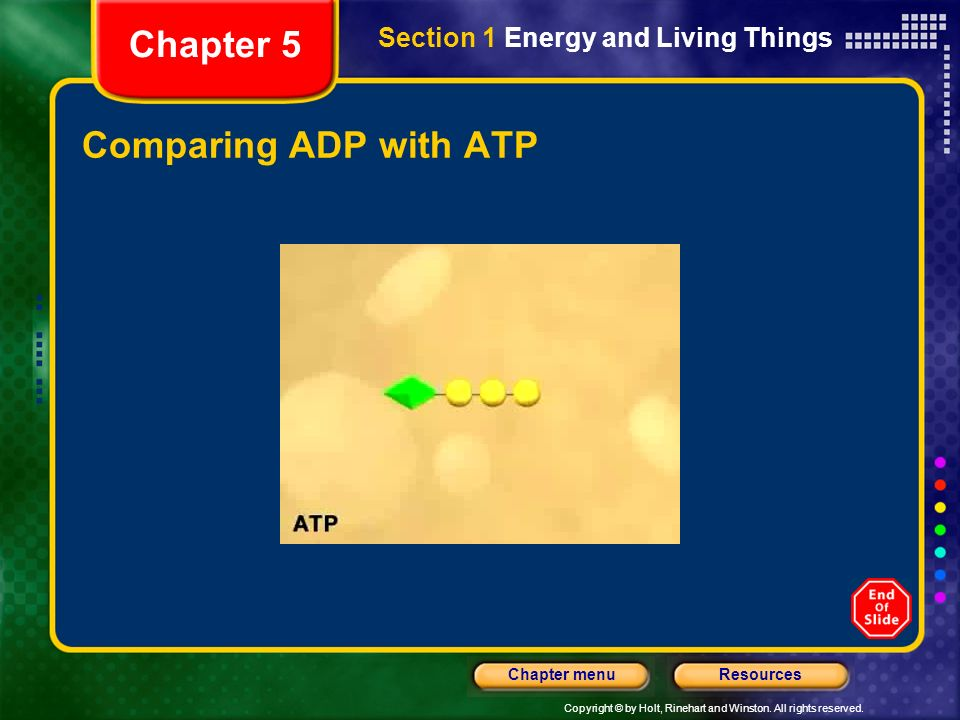 Chapter 5 Section 1 Energy and Living Things Comparing ADP with ATP