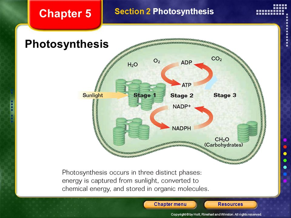 Chapter 5 Section 2 Photosynthesis Photosynthesis