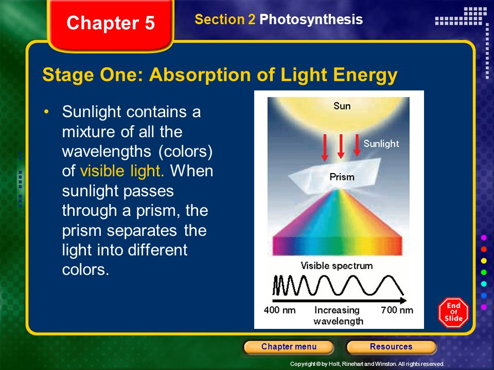 Stage One: Absorption of Light Energy