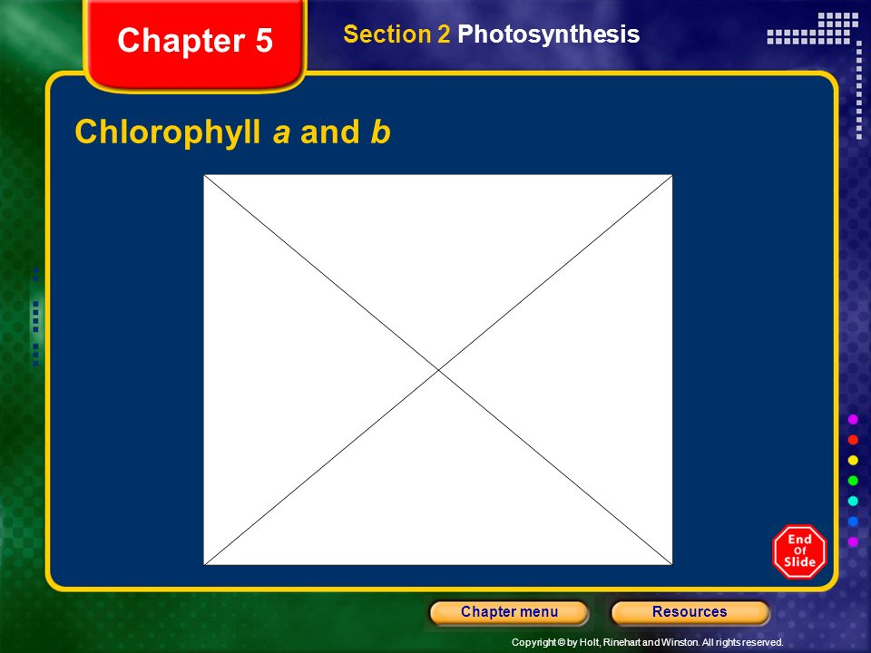 Chapter 5 Section 2 Photosynthesis Chlorophyll a and b