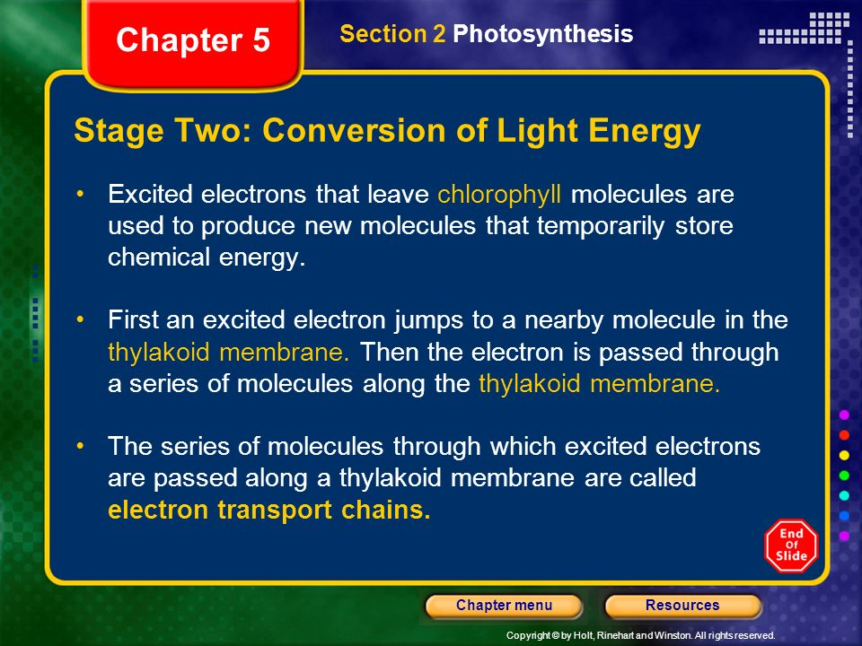 Stage Two: Conversion of Light Energy