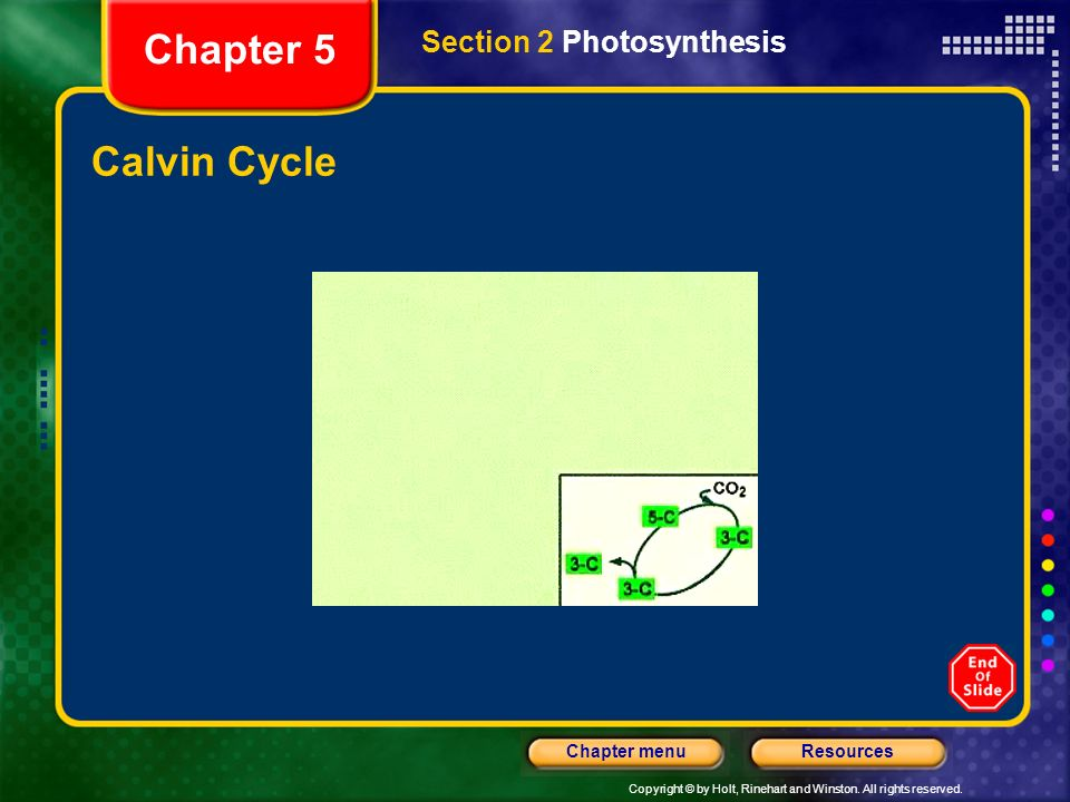 Chapter 5 Section 2 Photosynthesis Calvin Cycle
