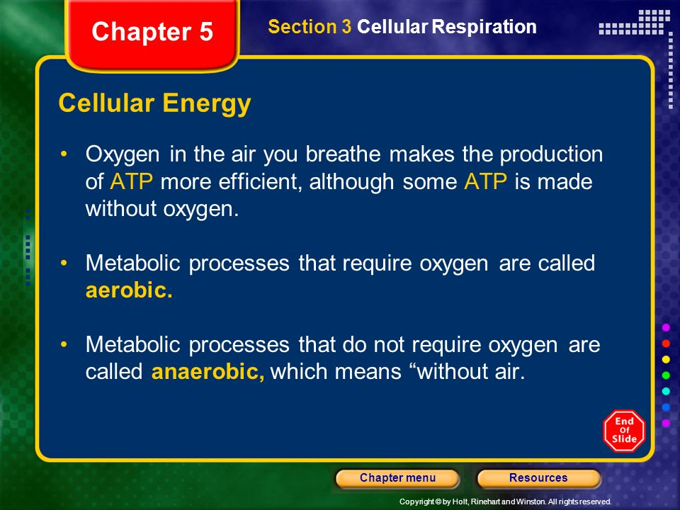 Chapter 5 Cellular Energy