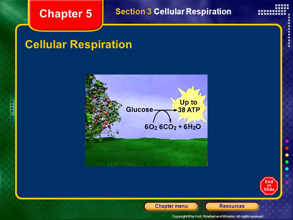 Chapter 5 Section 3 Cellular Respiration Cellular Respiration