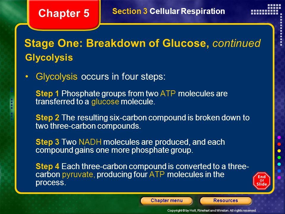 Stage One: Breakdown of Glucose, continued