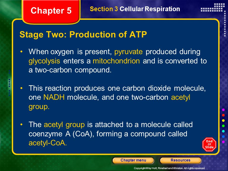 Stage Two: Production of ATP