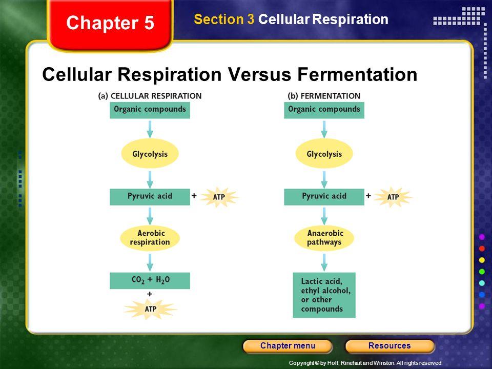 Cellular Respiration Versus Fermentation