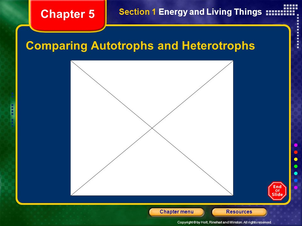 Comparing Autotrophs and Heterotrophs