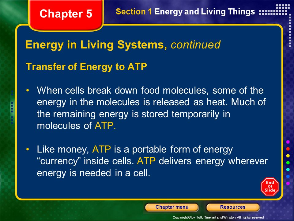 Energy in Living Systems, continued