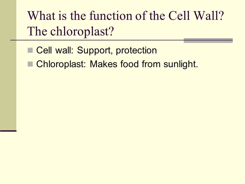 What is the function of the Cell Wall The chloroplast