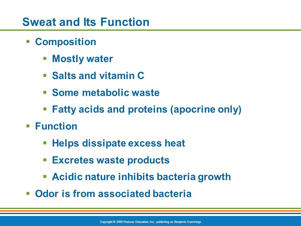Sweat and Its Function Composition Mostly water Salts and vitamin C