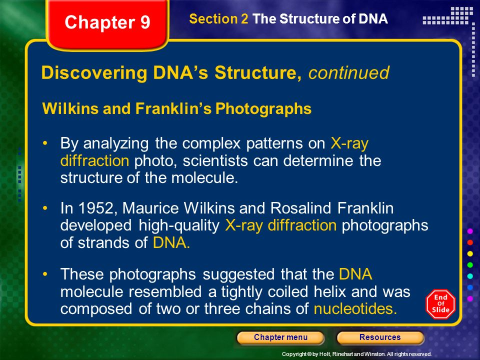 Discovering DNA's Structure, continued