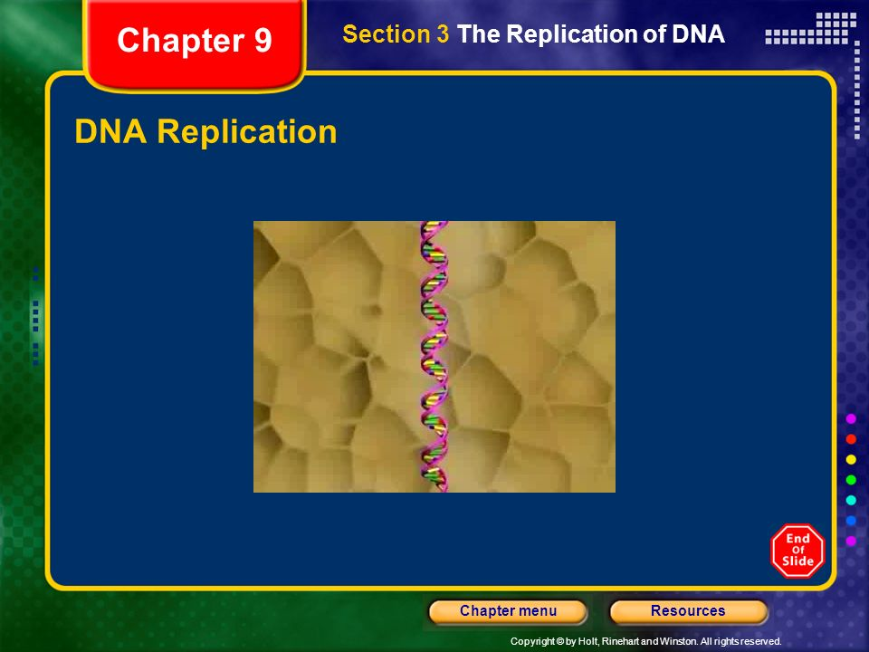 Chapter 9 Section 3 The Replication of DNA DNA Replication