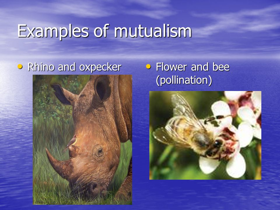 Ecology Notes. - ppt video online download