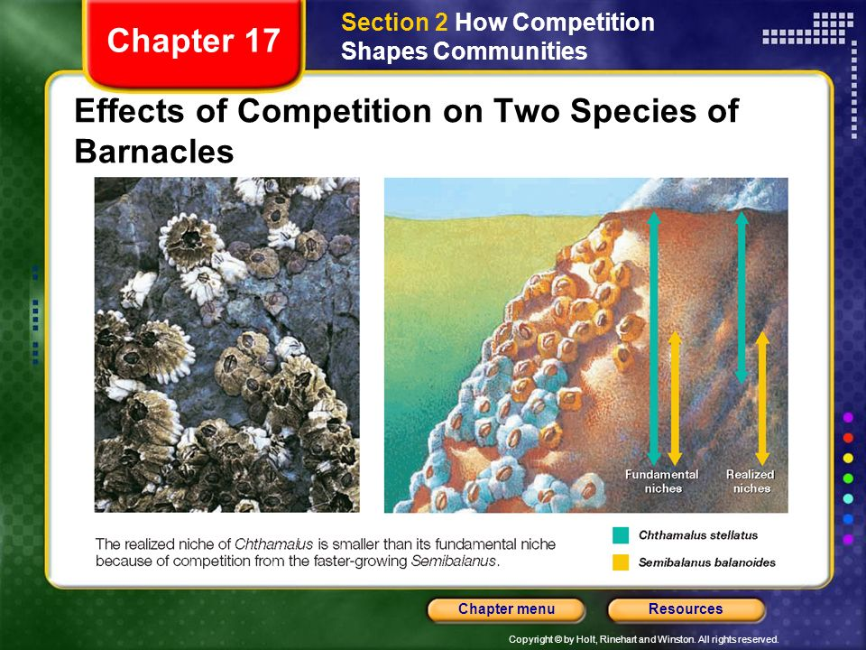 Effects of Competition on Two Species of Barnacles
