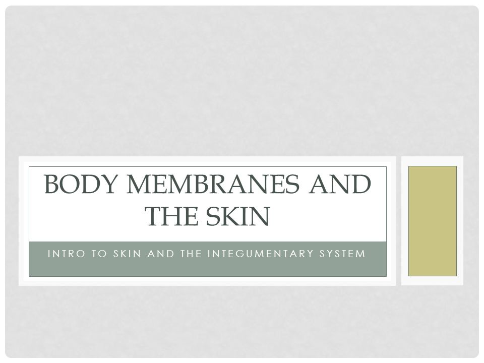 Body Membranes And The Skin Ppt Video Online Download
