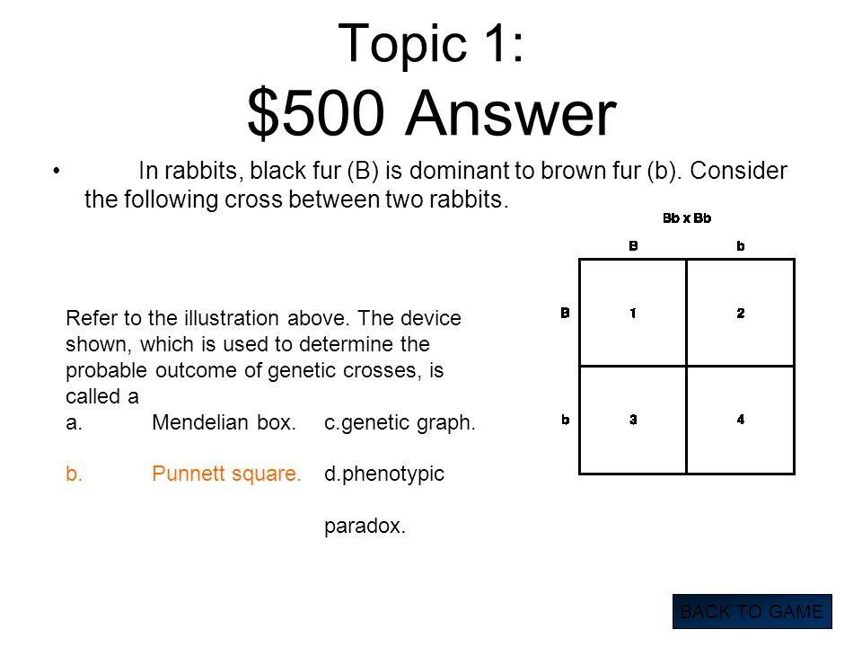 Topic 1: $500 Answer In rabbits, black fur (B) is dominant to brown fur (b). Consider the following cross between two rabbits.