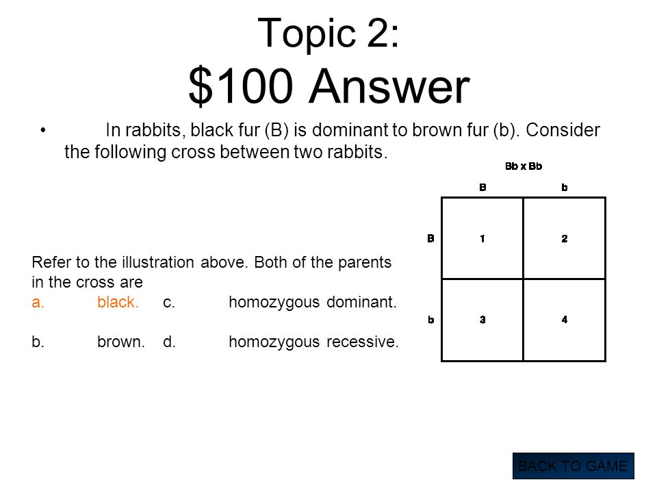 Topic 2: $100 Answer In rabbits, black fur (B) is dominant to brown fur (b). Consider the following cross between two rabbits.