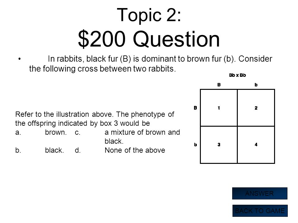 Topic 2: $200 Question In rabbits, black fur (B) is dominant to brown fur (b). Consider the following cross between two rabbits.
