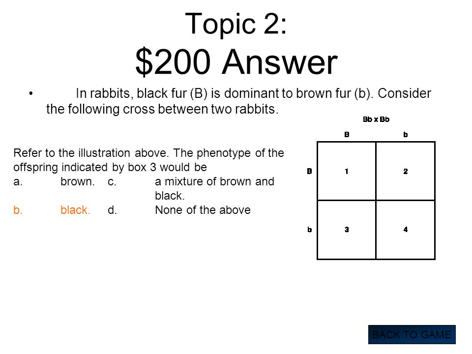 Topic 2: $200 Answer In rabbits, black fur (B) is dominant to brown fur (b). Consider the following cross between two rabbits.