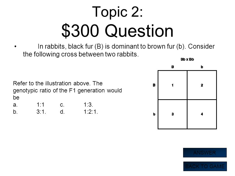 Topic 2: $300 Question In rabbits, black fur (B) is dominant to brown fur (b). Consider the following cross between two rabbits.