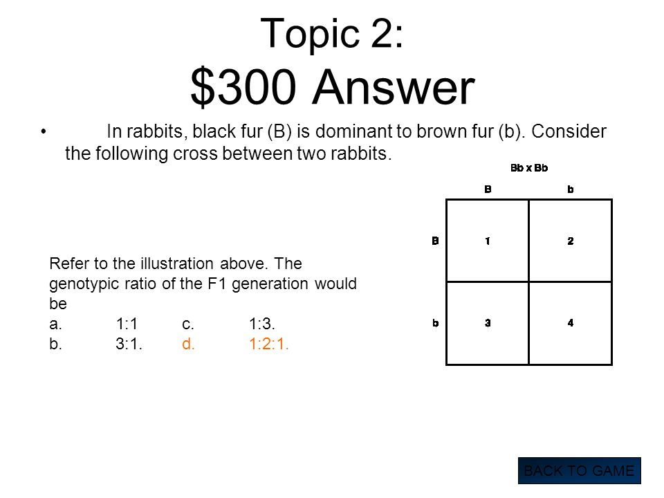 Topic 2: $300 Answer In rabbits, black fur (B) is dominant to brown fur (b). Consider the following cross between two rabbits.