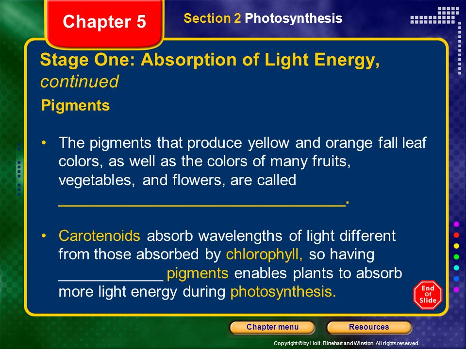 Stage One: Absorption of Light Energy, continued