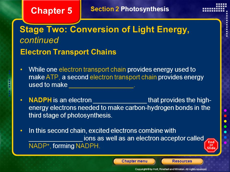 Stage Two: Conversion of Light Energy, continued