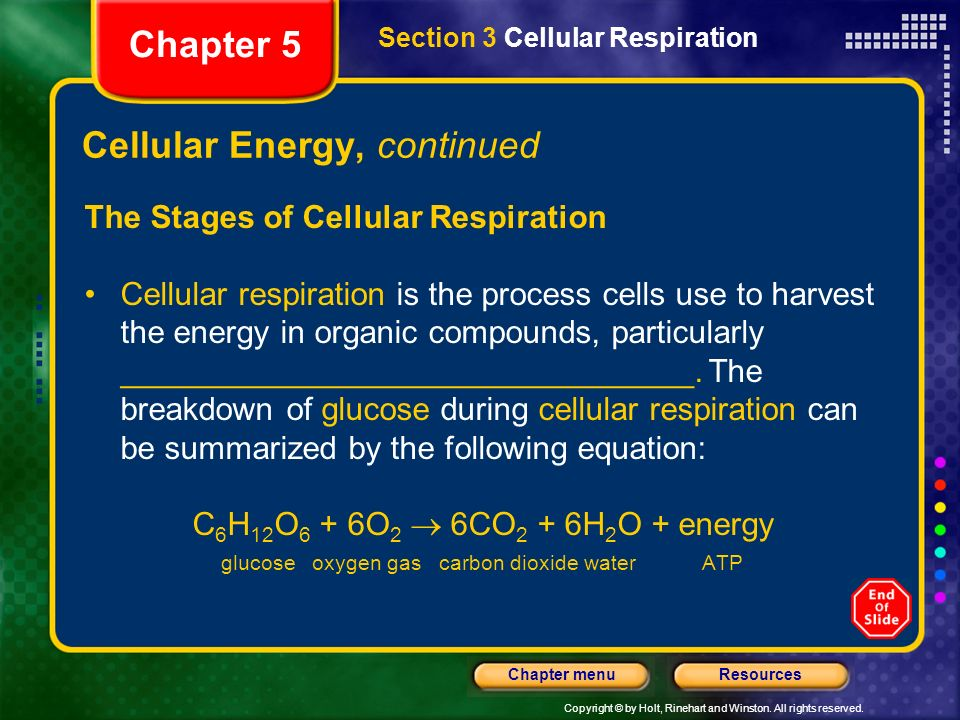 Cellular Energy, continued