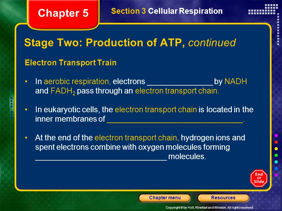 Stage Two: Production of ATP, continued