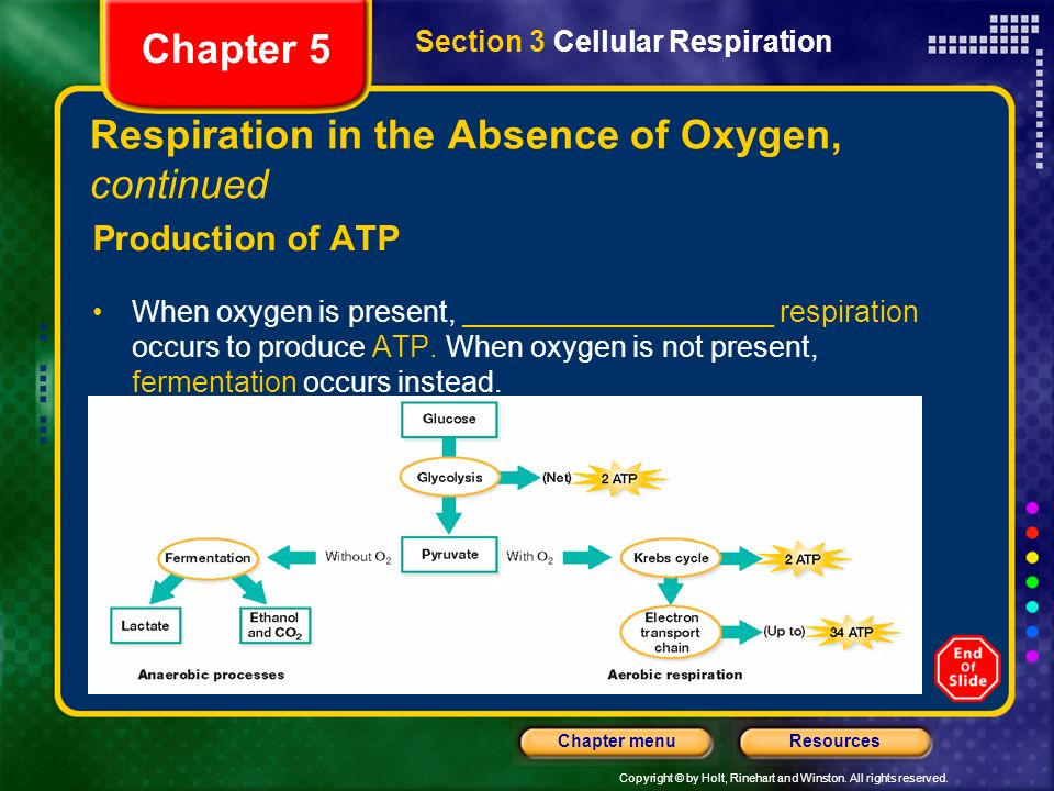 Respiration in the Absence of Oxygen, continued