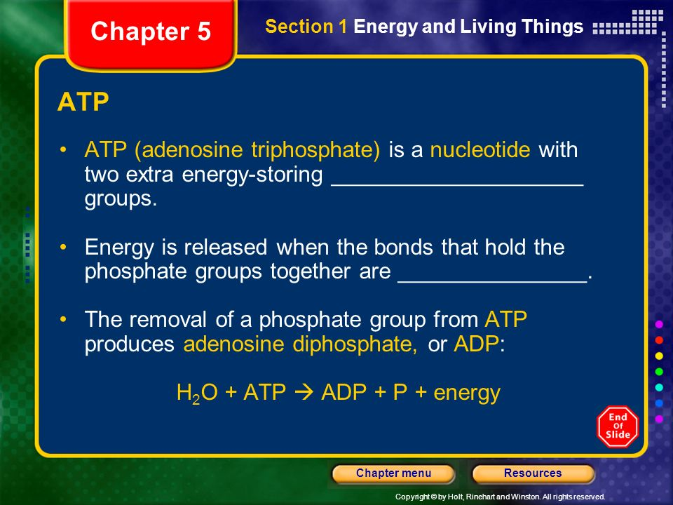Chapter 5 Section 1 Energy and Living Things. ATP.