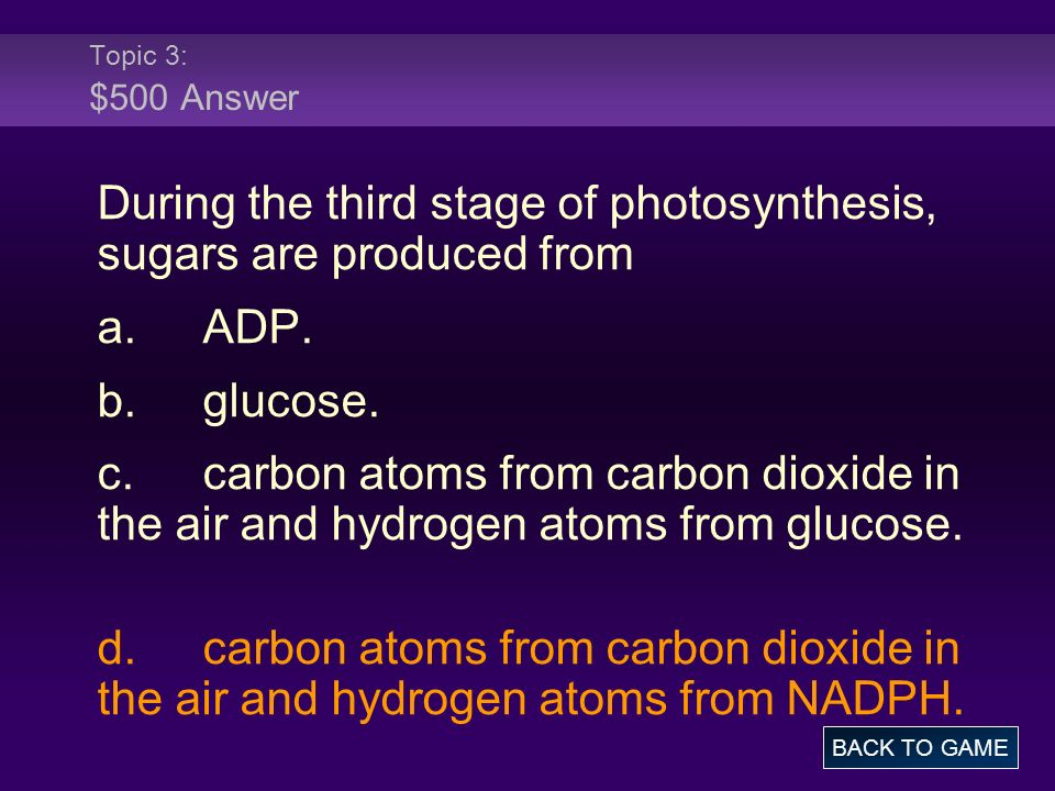 During the third stage of photosynthesis, sugars are produced from