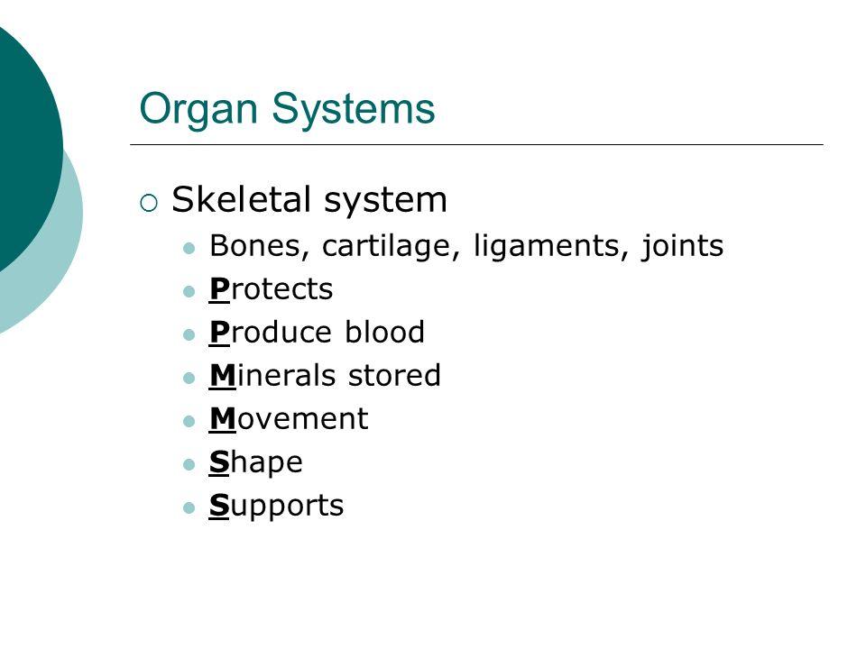 Organ Systems Skeletal system Bones, cartilage, ligaments, joints