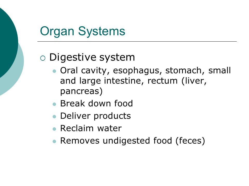 Organ Systems Digestive system