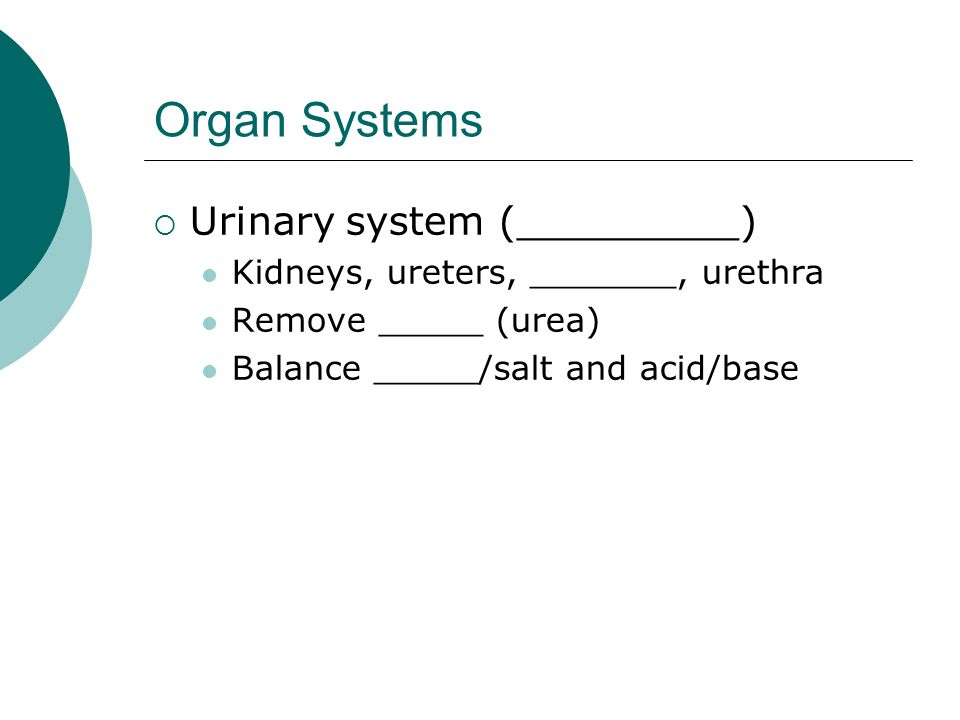 Organ Systems Urinary system (_________)