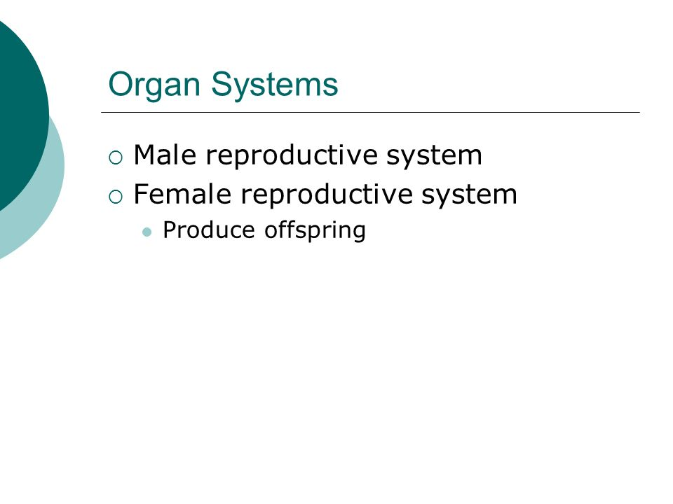 Organ Systems Male reproductive system Female reproductive system
