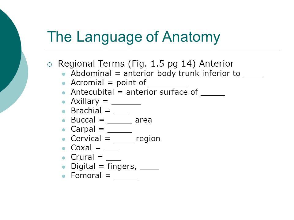 The Language of Anatomy